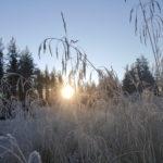 Soloppgang høst